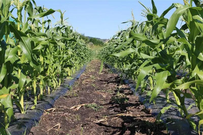 ferma legume bio in cluj