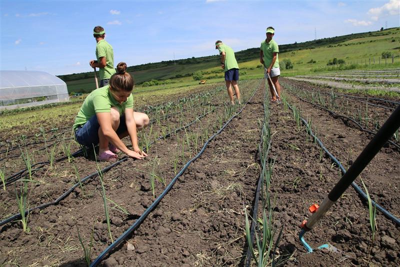 ferma legume bio