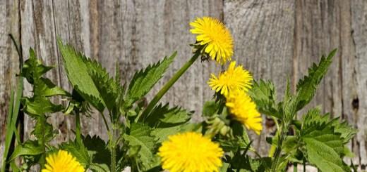 Cele mai bune plante care te ajuta impotriva anemiei