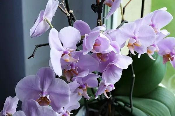 Cum sa ai grija de orhidee