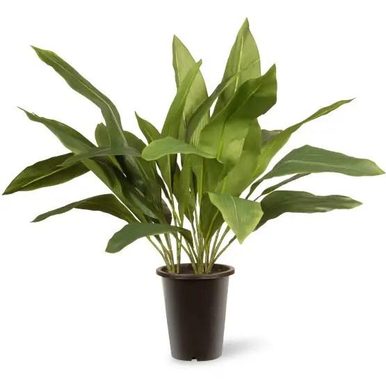 floare pana cocosului