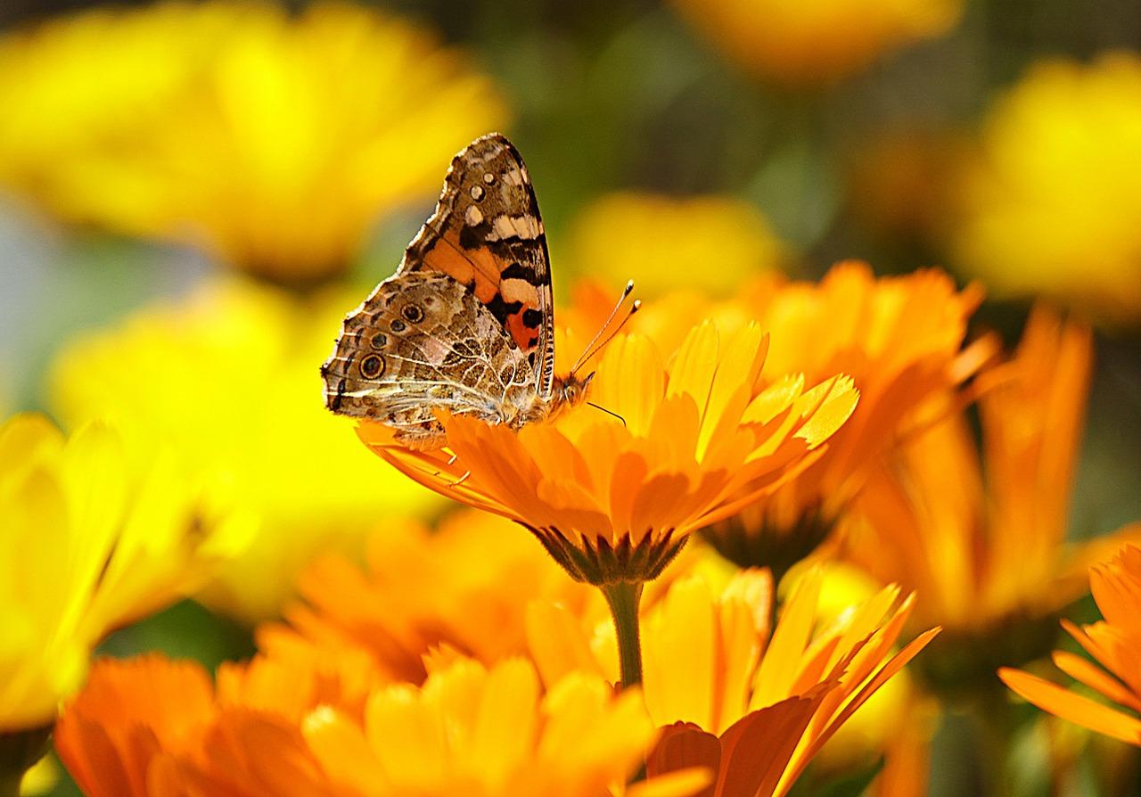 Flori de gradina care iubesc soarele