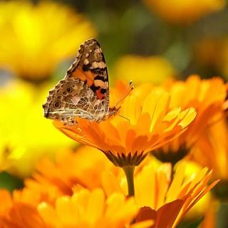 flori-de-gradina-care-iubesc-soarele