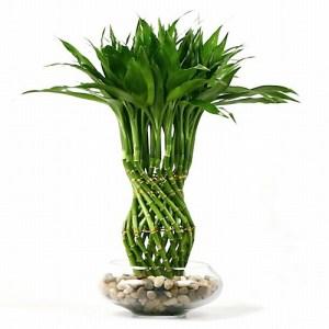Bambusi norocosi