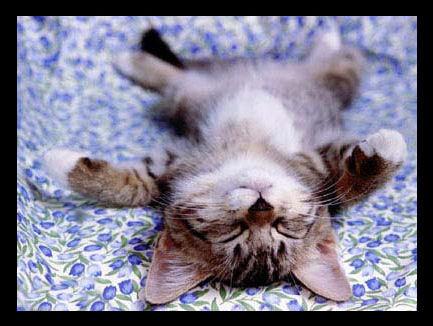 pisica-relaxata