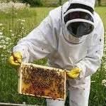 Richard Baxter beekeeper