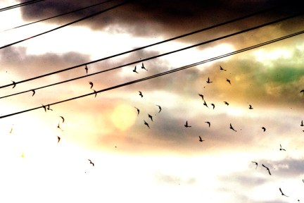 Alan Blueford 1st year memorial released doves in evening sky 050513 by Malaika