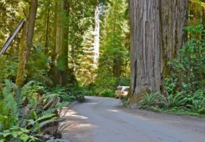Crescent City is in redwood country. This is what the writer means when he marvels at the enormous trees.
