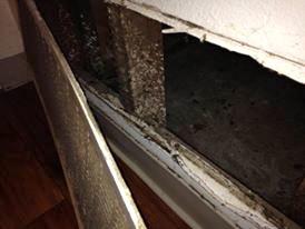 Dark mold inside the wall vent behind Liz Washington's front door – Photo: Carol Harvey