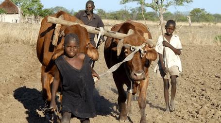 https://i1.wp.com/sfbayview.com/wp-content/uploads/2016/02/Traditional-farmer-Masvingo-Province-Zimbabwe.png