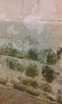 This black mold is in a shower at Holman Prison.