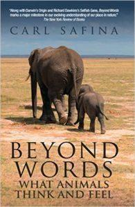 beyondwords