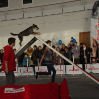 Соревнования на выставке Зоосфера 2011
