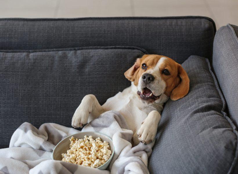Собака с попкорном лежит на диване в расслабленной позе
