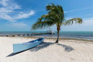 white canoe near palm tree