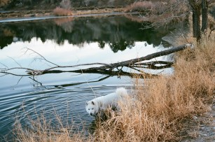 A pond in Colorado. (Alex Emslie)