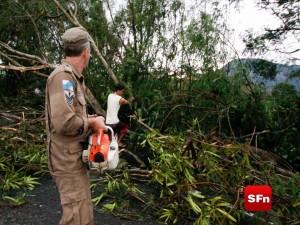 queda de árvore na RJ 158 mauro de souza 2