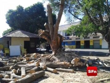 queda árvore 2