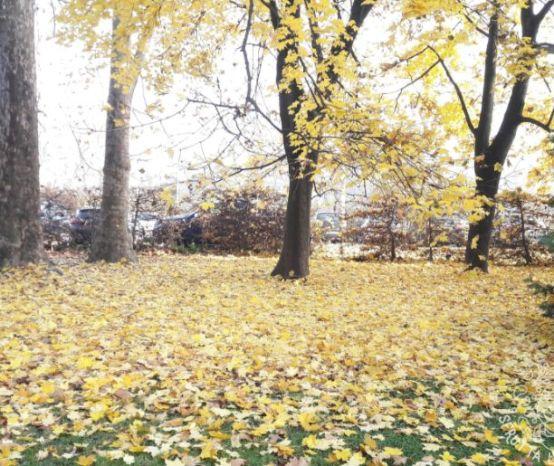 I lavori da NON fare in autunno in giardino