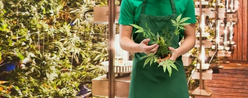 marijuana sales licensing