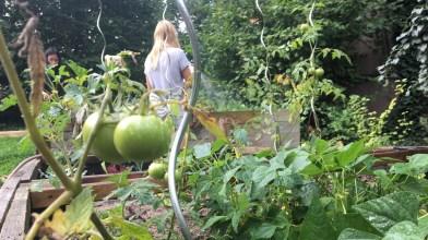 24.08.2017: Tomaten und frisches Gemüse im Schulgarten