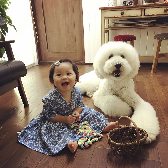 japanese girl pet poodle