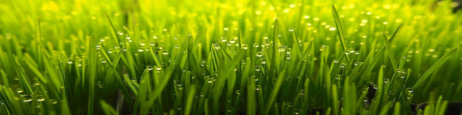 seedling_petgrass2