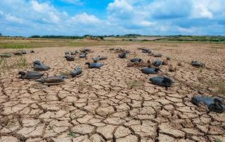 Pregun tas frecuentes acerca de la desertificación