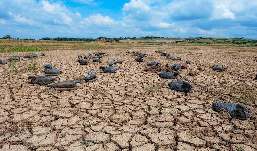 Preguntas frecuentes acerca de la desertificación