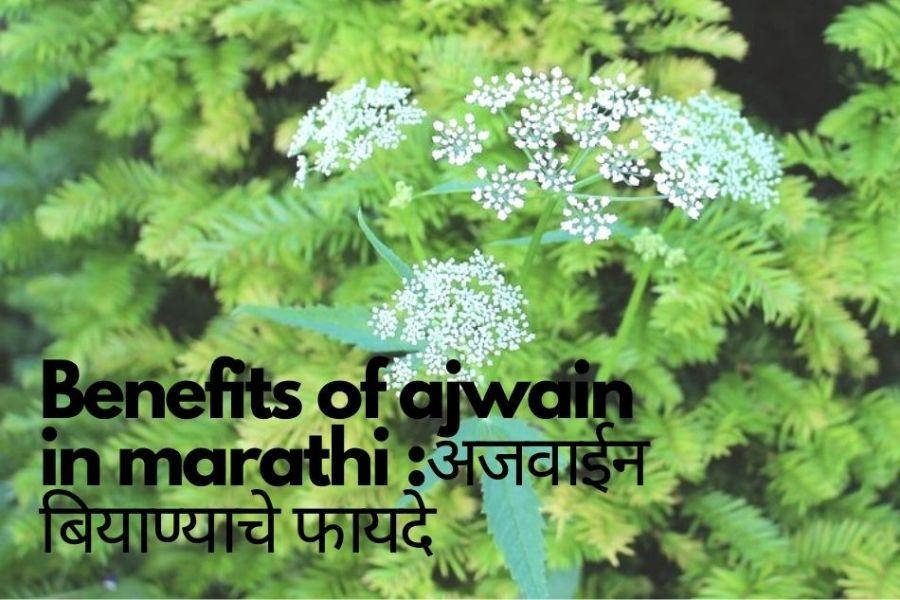 Ajwain in marathi