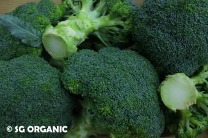 Healthy green broccoli