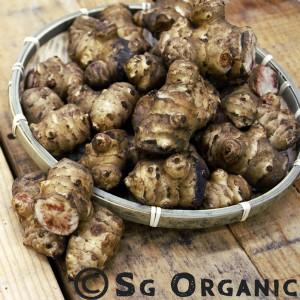 SG Organic Jerusalem artichoke