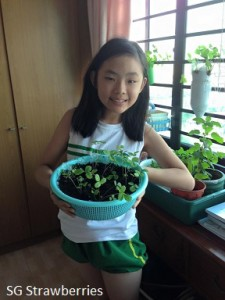 Growing strawberries with children