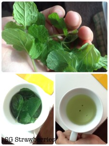 How to brew home grown fresh mint for tea