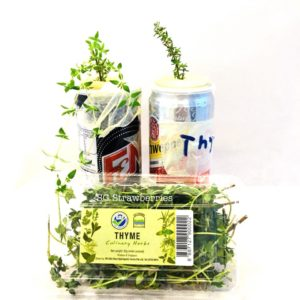 Grow thyme from supermarket cutting