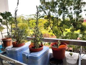 Lavender plants from cutting