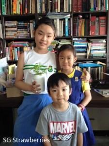 SG Strawberries kids