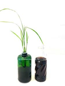 How to grow rice from seeds