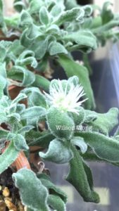 Ice Plant in Singapore