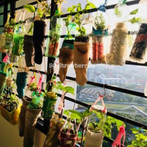 Creative PET Bottles Recycling IDEAS