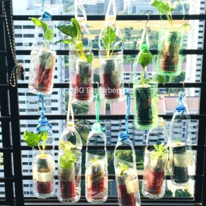 Creative PET bottles garden containers