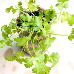 Grow Harvest Fresh Herbs Indoor