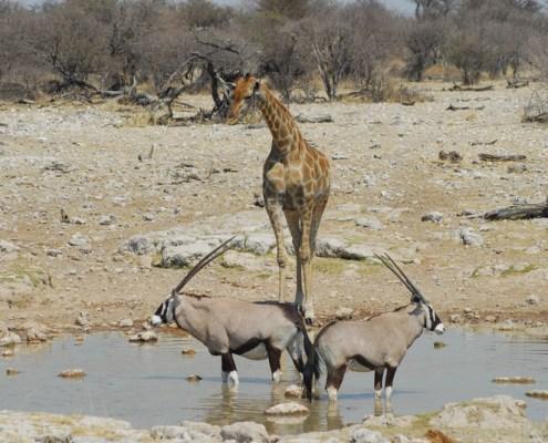 Namibia: Etosha NP. Paesaggio