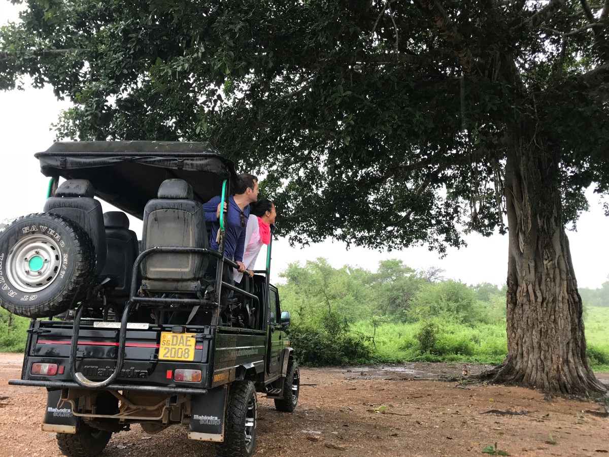 Sri Lanka Safari: Udawalawe or Yala?