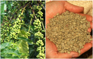 Green Coffee benefits in hindi