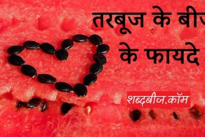 watermelon seeds benefits in hindi