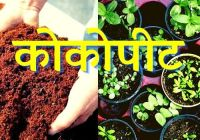 cocopeat in hindi