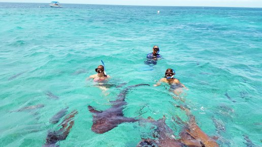 shark ray-alley Belize