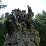 Another picture of the tree stump