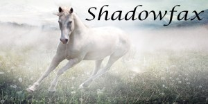 Shadowfax portrait - white horse in a sparkling field